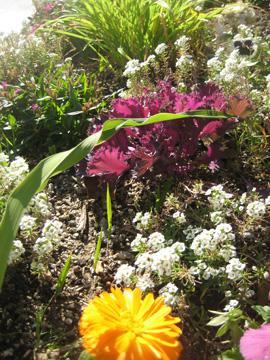 ontario-flowers.jpg