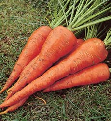 carrotst_valery.jpg