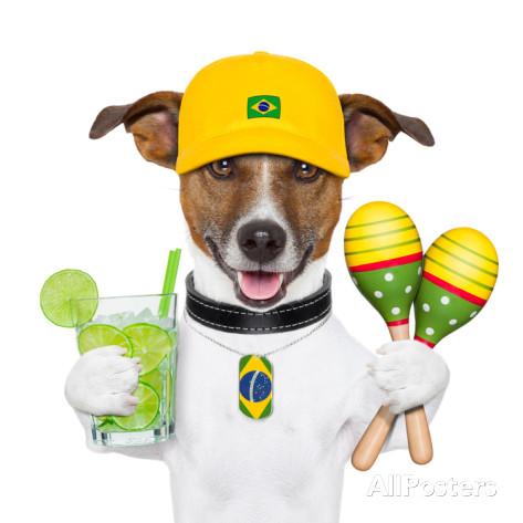 javier-brosch-funny-dog-brazil