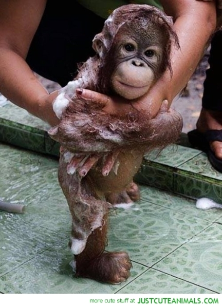 cute-animal-pictures-monkey-bubble-bath