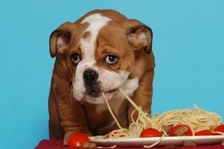 dog-spaghetti