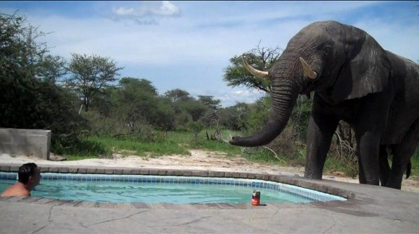 Elephant-crashes-the-pool-party