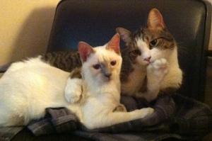 listening-cats