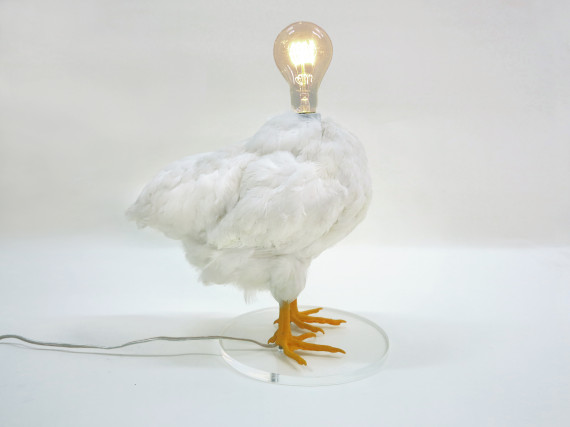 o-LAMP-570