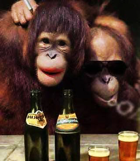 Mr-and-Mrs-Monkey-in-Bar-Club