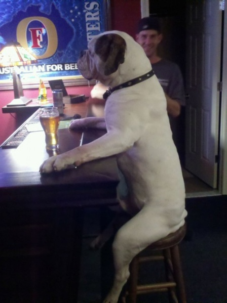tydy6-dog-sitting-at-bar