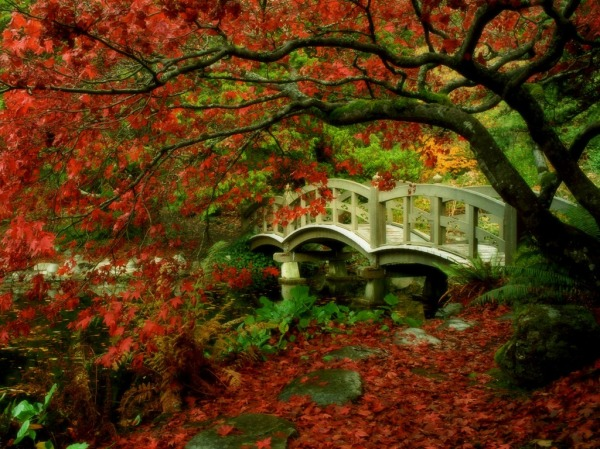 Autumn_Garden_Wallpaper_9o6xy