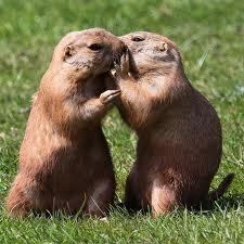 animalsswhispering