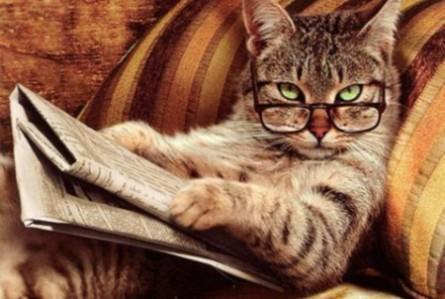 cat-reading-newspaper-445x299