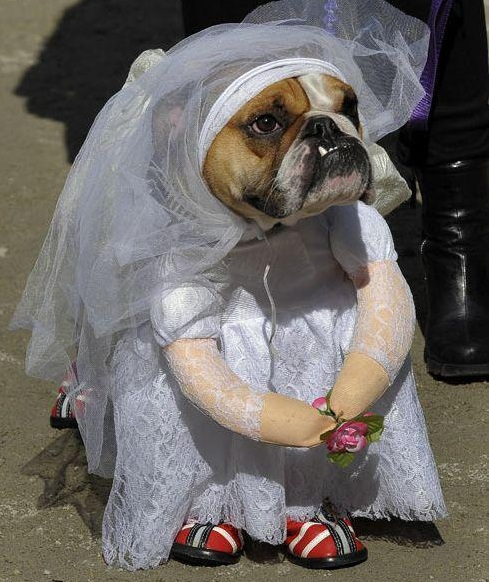 a.baa-Dog-wedding-D