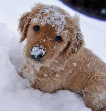 Beautiful-Dog