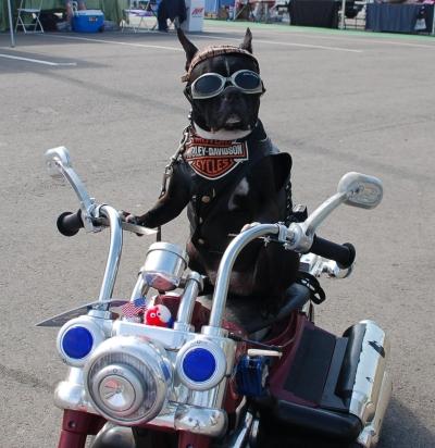 Biker-Dog4