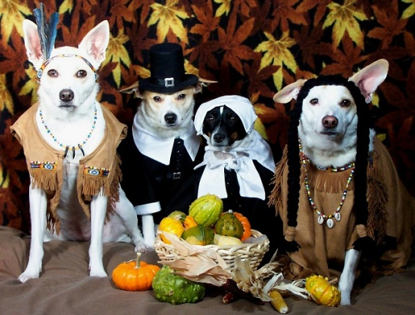 thanksgiving-dogs