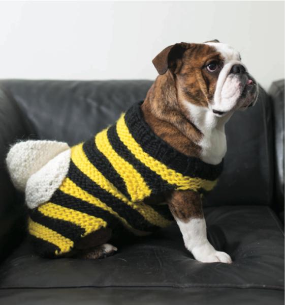 bumblebee-dogknits1