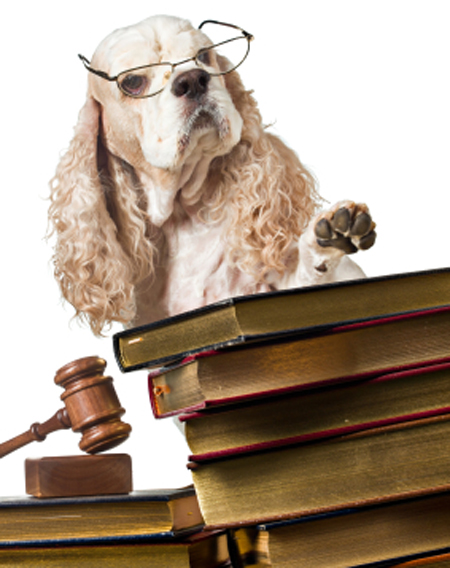 dog-judge-books-gavel-law-450
