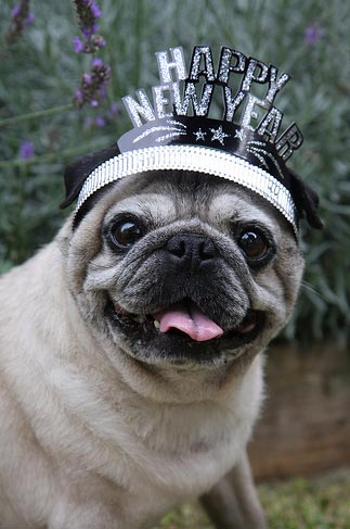 dog-new-years-hat-6