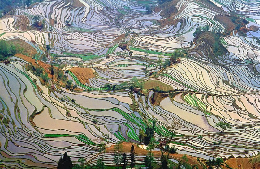 Terrace-rice-fields-in-Yunnan-Province-China-2