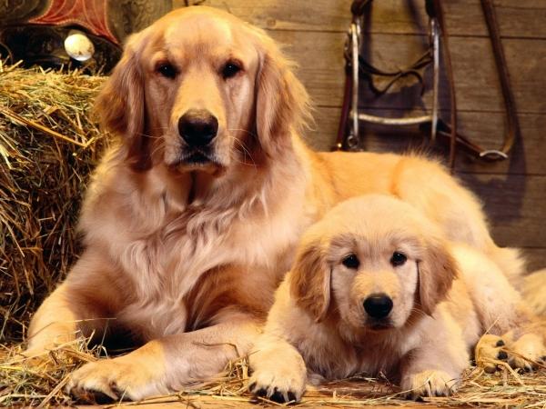 cub-dog-puppy_782860