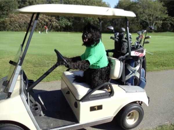 golf bob 3