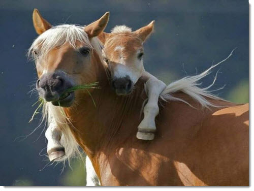 mother-baby-horse-2