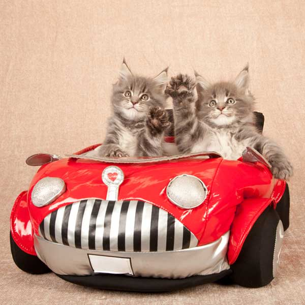 cats-in-car