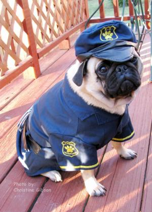 k9-cop-dog-halloween-costume-by-casual-canine-1829