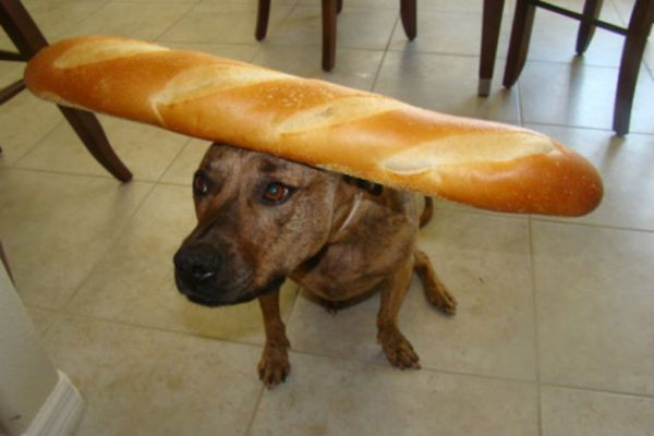 Tiger-with-French-Bread