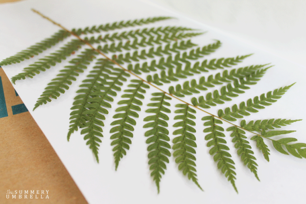 diy-fern-art