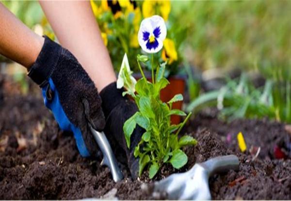 gardening-tips-03
