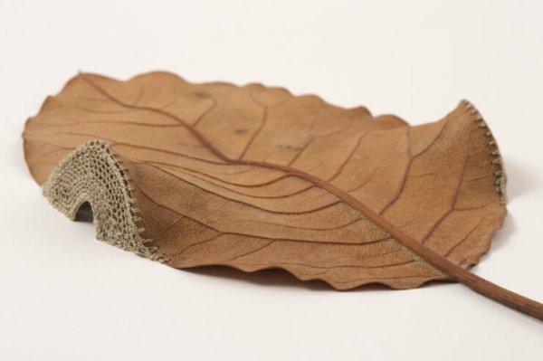 Leaf-Art4