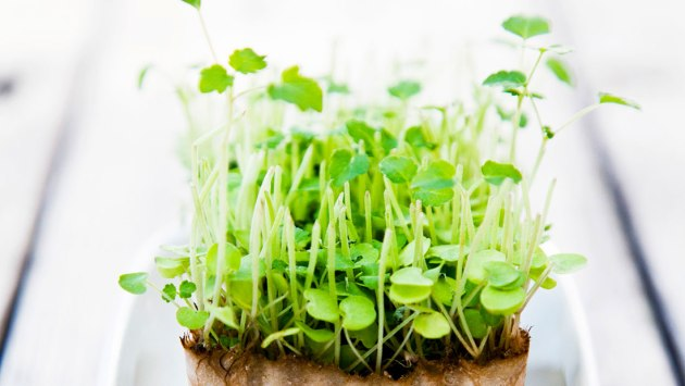 microgreenshero-johner_-stockfood.jpg